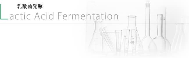 乳酸菌発酵